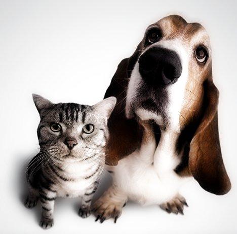 Ο σκύλος και ο γάτος